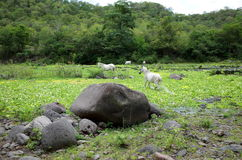 Riserva naturale di Miraflor Fotografia Stock