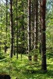 Riserva naturale Ingar. Immagini Stock
