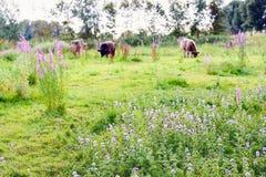 Riserva naturale olandese variopinta nella stagione estiva Fotografia Stock Libera da Diritti