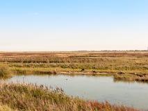 Riserva naturale soleggiata di scena della corrente del fiume con le pecore che guardano fisso nel fie Fotografie Stock Libere da Diritti