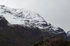 Riserva nazionale di RÃo Blanco, Cile centrale, un'alta valle di biodiversità nel Los le Ande Fotografia Stock Libera da Diritti