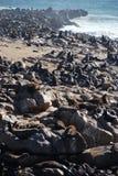 Riserva trasversale della guarnizione del capo Litorale di scheletro Namibia Immagini Stock
