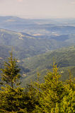 Riserve della foresta in Bulgaria Immagini Stock