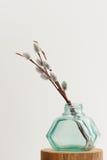 Riset för Pussypil i grönt exponeringsglas skorrar vasen på vit bakgrund Arkivfoton