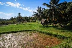 Risfält ÃŽle Sainte-Marie, Madagascar Arkivbilder