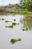 Risfält Arkivbilder
