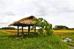 Risfält Arkivbild