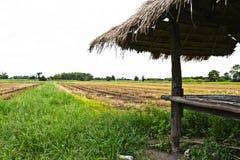 Risfält Fotografering för Bildbyråer