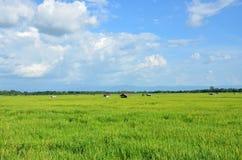 Risfält av blå himmel Royaltyfri Fotografi