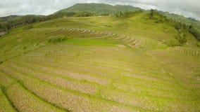 Risfält av Filippinerna Ön av Bohol Pablacion Anda stock video