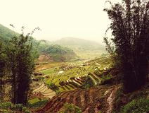 Risfält av Sa-PA-dalen i Vietnam Royaltyfria Bilder