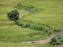 Risfält av Sagada, Luzon, Filippinerna Arkivfoton