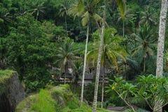 Risfält Bali med moln och palmträd Fotografering för Bildbyråer