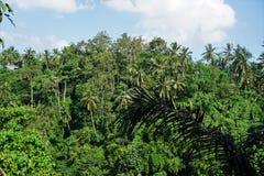 Risfält Bali med moln och palmträd Arkivbilder