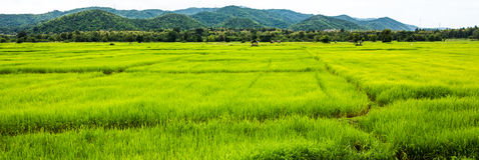Risfält Chiang Mai Royaltyfri Fotografi