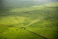 Risfält för spindelrengöringsduk i Ruteng Arkivfoto