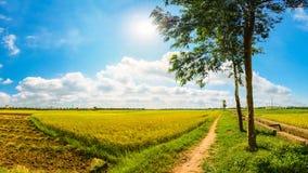 Risfält i den soliga dagen Arkivfoto