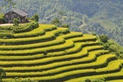 Risfält i Ha Giang Arkivfoton