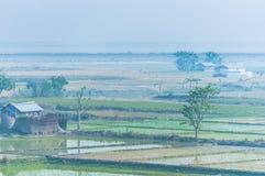 Risfält i Indien, Assam nära Brahmaputra River arkivfoto
