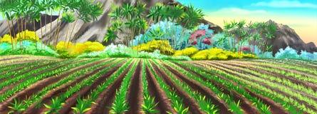 Risfält i Kina Arkivfoton