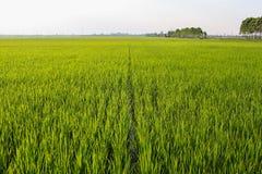 Risfält i Ninh Binh Province Arkivfoton