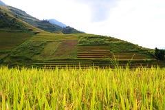 Risfält i nordligt av Vietnam Arkivfoto