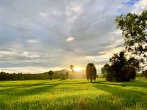Risfält i Thailand, palmträd, fertila berg arkivbild