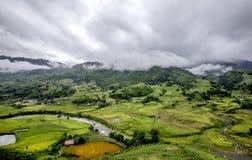 Risfält i Vietnam Arkivfoton
