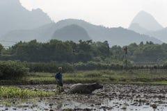 Risfält Kina Arkivfoto
