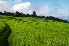 Risfält lantlig bergsikt med härligt landskap Arkivbild