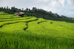Risfält lantlig bergsikt med härligt landskap Arkivbilder