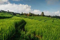 Risfält lantlig bergsikt med härligt landskap Royaltyfri Bild