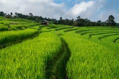 Risfält lantlig bergsikt med härligt landskap Royaltyfri Fotografi