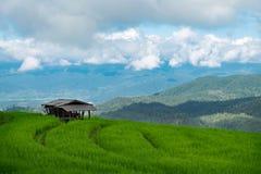 Risfält lantlig bergsikt med härligt landskap Royaltyfria Foton