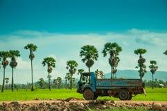 Risfält med den gamla lastbilen Royaltyfri Fotografi