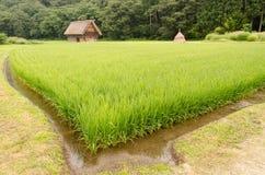 Risfält med det traditionella huset royaltyfri foto