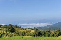 Risfält med morgonmist på förbudPA Bong Piang, Mae Cham, Chi Arkivbild