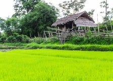 Risfält med stugan i Thailand Royaltyfri Bild