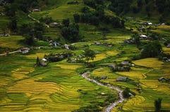 Risfält nära Sapa, Vietnam Arkivbilder