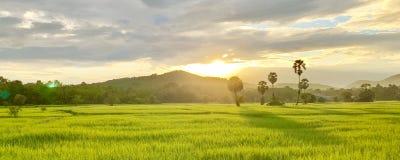Risfält och bondaktig livsstil royaltyfria foton