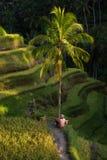 Risfält och bonde Ubud Bali, Indonesien royaltyfri fotografi