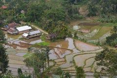 Risfält och bosättning Arkivfoton