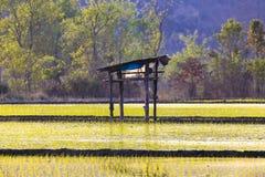 Risfält och centralt i fält en liten koja arkivfoto