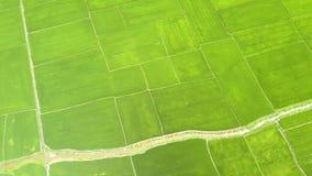 Risfält och flod för flyg- sikt i asiatisk by Koloni för ris för surrsiktsgräsplan jordbruks- industri Bruka och lager videofilmer