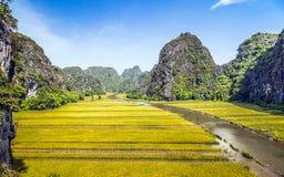 Risfält och flod i TamCoc, NinhBinh, Vietnam fotografering för bildbyråer