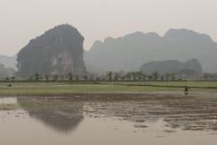 Risfält och flod Nimh Binh, Vietnam Royaltyfri Foto
