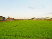 Risfält och himmel Fotografering för Bildbyråer