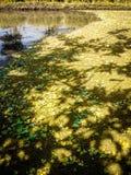 Risfält och mossa Royaltyfri Fotografi