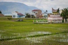 Risfält och traditionella indonesiska hus på Sumatra royaltyfri bild
