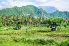 Risfält och vulkan Agung Arkivbild